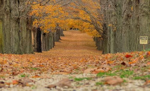 Leaves ... fall in Millstone NJ